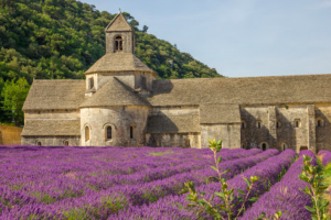 Lavender fields at Abbaye Notre-Dame